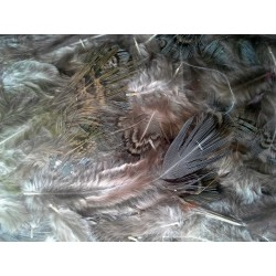 Перо фазана, 4-6см, 3гр